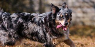 claudio_melluso_21_secolo_runningdog2