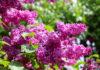 fiori_Claudia_Lanzetta_21_secolo