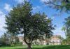 magnolia-foto-alessio-cuccaro_21secolo_valentinamaisto