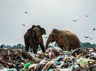 Elefanti disastro ambientale